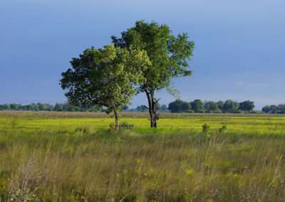 Botswana (15)
