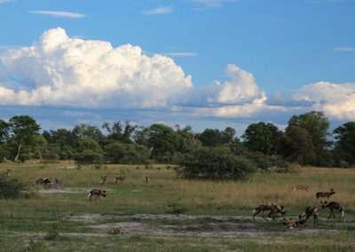 Botswana (8)