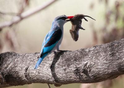 Botswana09