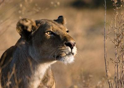Botswana15