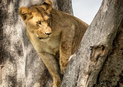Botswana32
