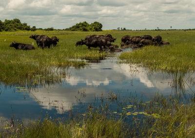Botswana39