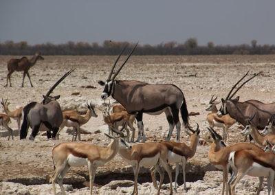 Namibia (12)