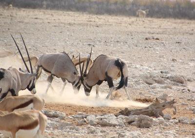 Namibia (14)