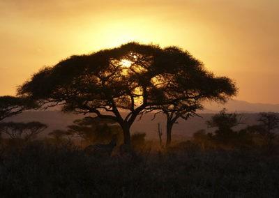 Tanzania40