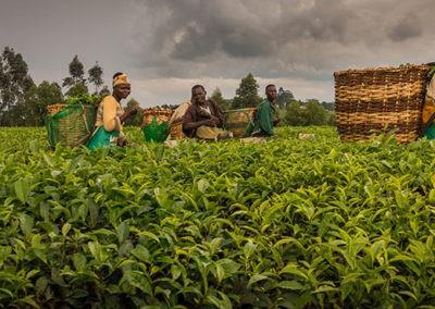Uganda (1)
