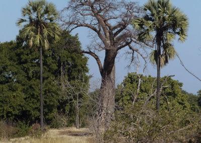 Zambia (13)