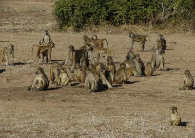 Zambia (14)