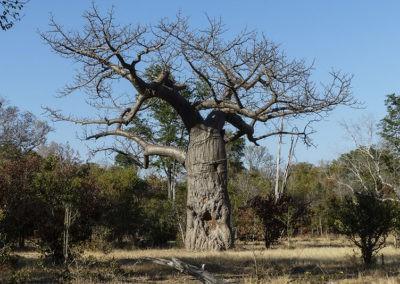 Zambia (15)
