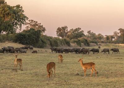 Zambia (24)