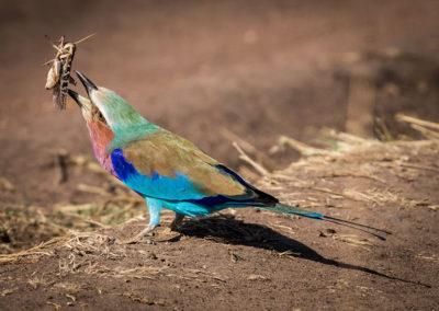 Zambia01