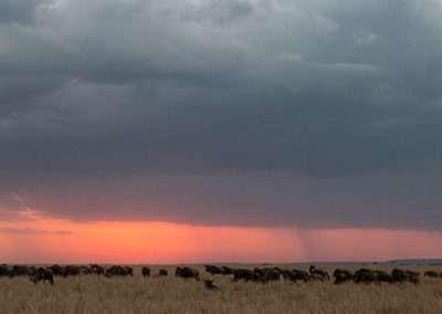 Zambia95